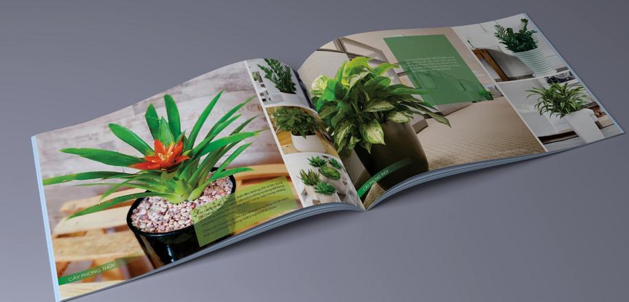 Catalogue Hà Nguyễn