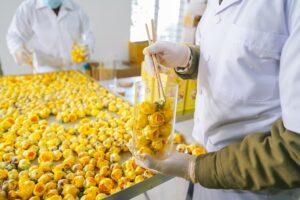 Mô hình sản xuất trà hoa vàng Quảng Ninh